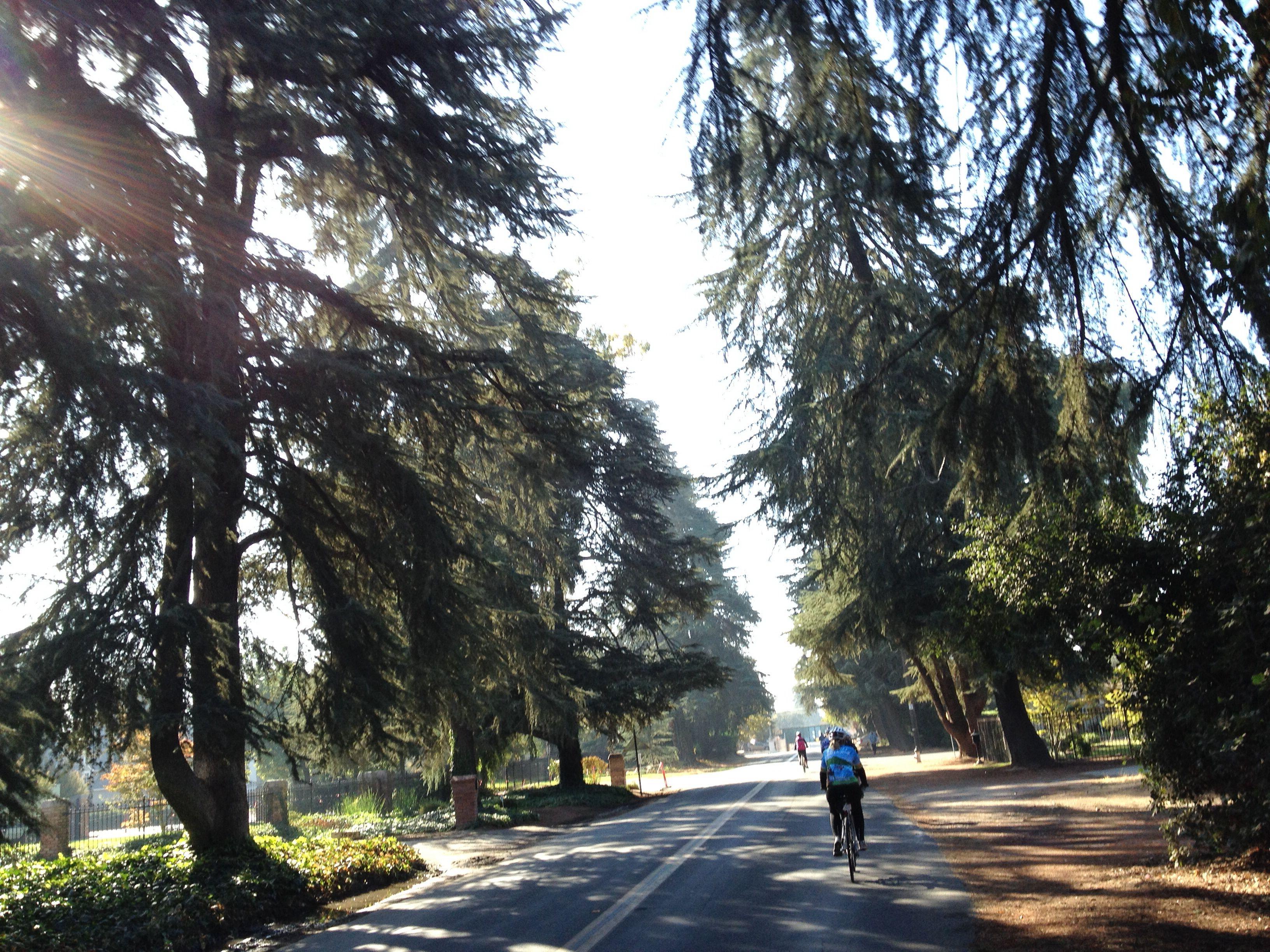 Christmas Tree Lane, Fresno Fresno california, Fresno