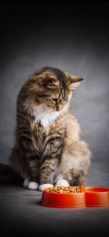 Pin By Leokinako On Batman S Zoo In 2020 Dog Cat Cats Pets