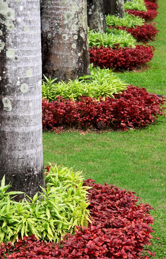 Download Decorating Plant Garden stock image Image of green