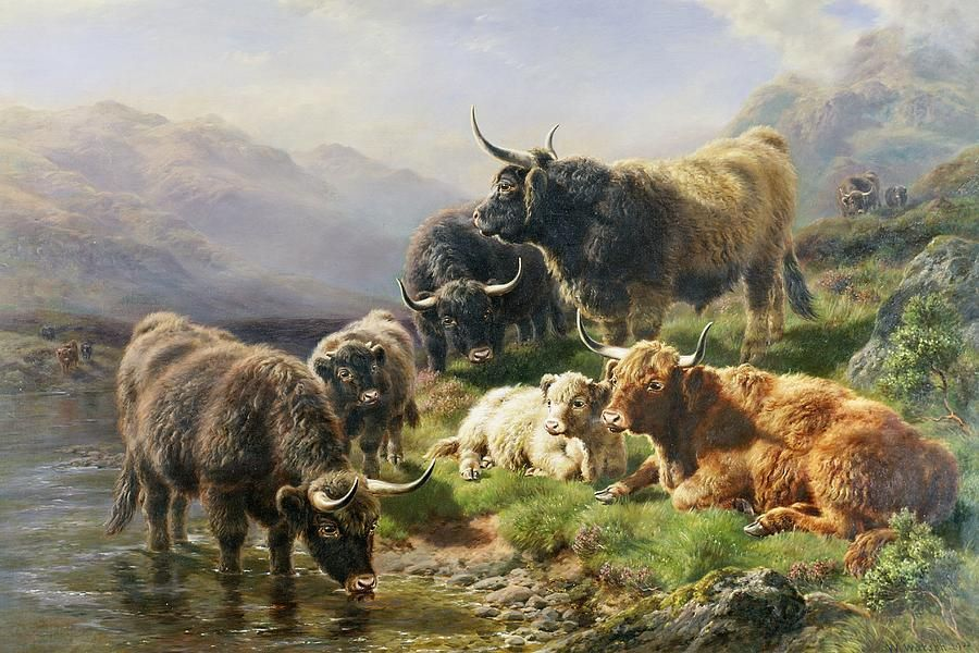 Highland Cattle Highland cattle, Highland cow painting