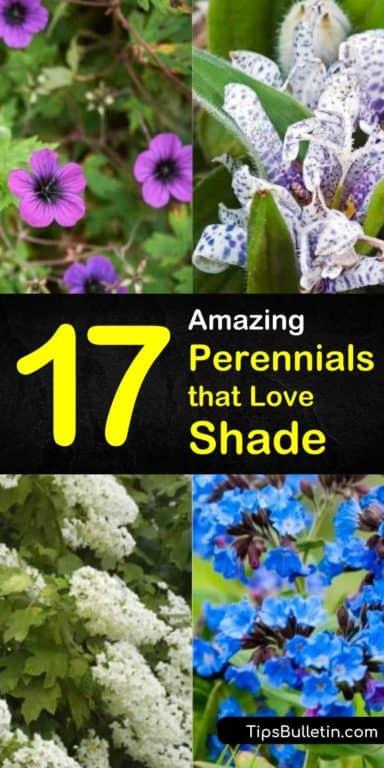 17 Amazing Perennials that Love Shade