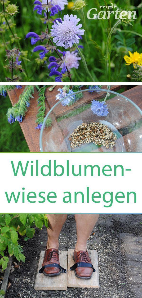 Blumenwiese im Garten anlegen und pflegen