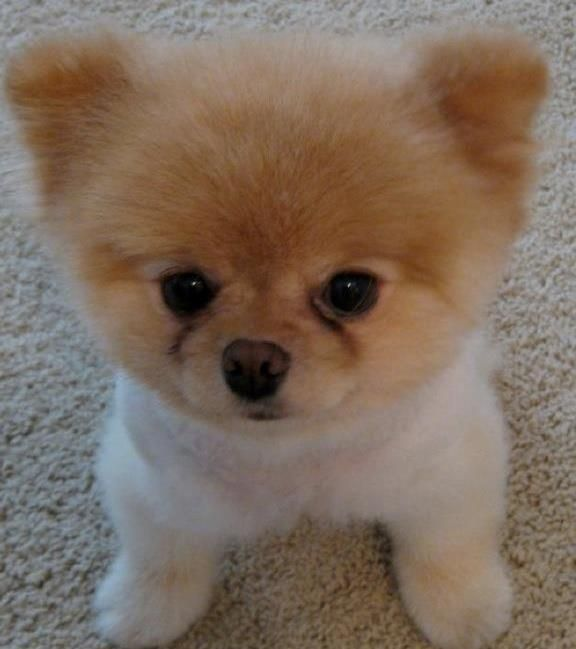 Beautiful Pet Anime Adorable Dog - f2da80cd006c6aa540603e19b91f314c  Best Photo Reference_89721  .jpg