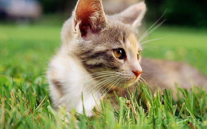 Pictures Of Newborn Kittens Baby Fluffy Kitten Baby Cat 430 2 Wallcoo Com Baby Fluffy Kitten Baby Cat Fleas