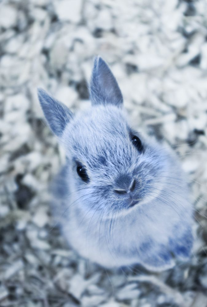 50 cute bunny pictures animals pinterest cute animals cute