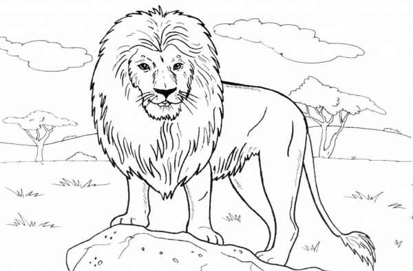 Lion Standing On A Rock Coloring Page Color Luna Lion Coloring Pages Animal Coloring Pages Animal Drawings
