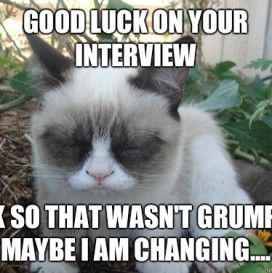 Good Luck At Your New Job Grumpy Cat Grumpy Cat New Job Luck