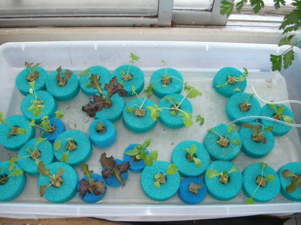 Advantages Of Aquaponic Farming For Organic Lovers