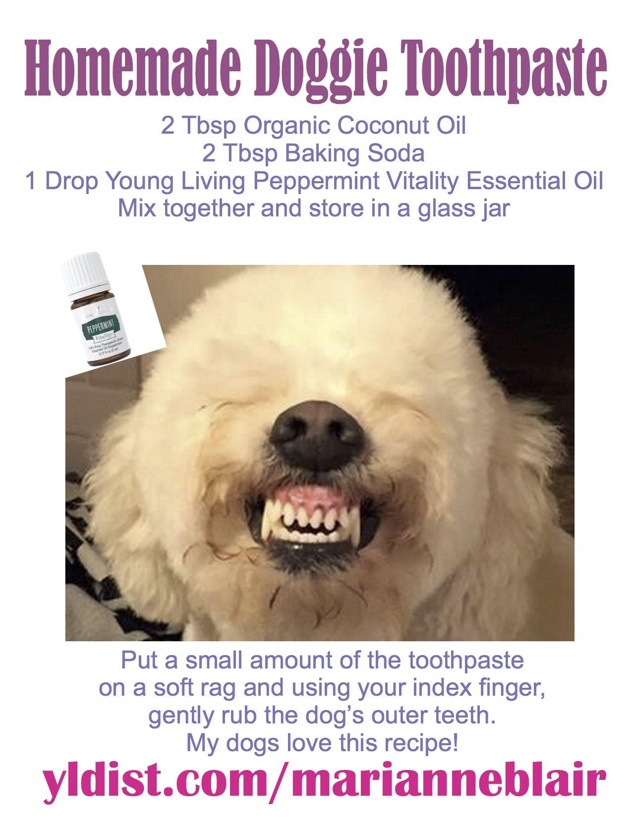Homemade Dog Toothpaste Dog Toothpaste Diy Dog Toothpaste