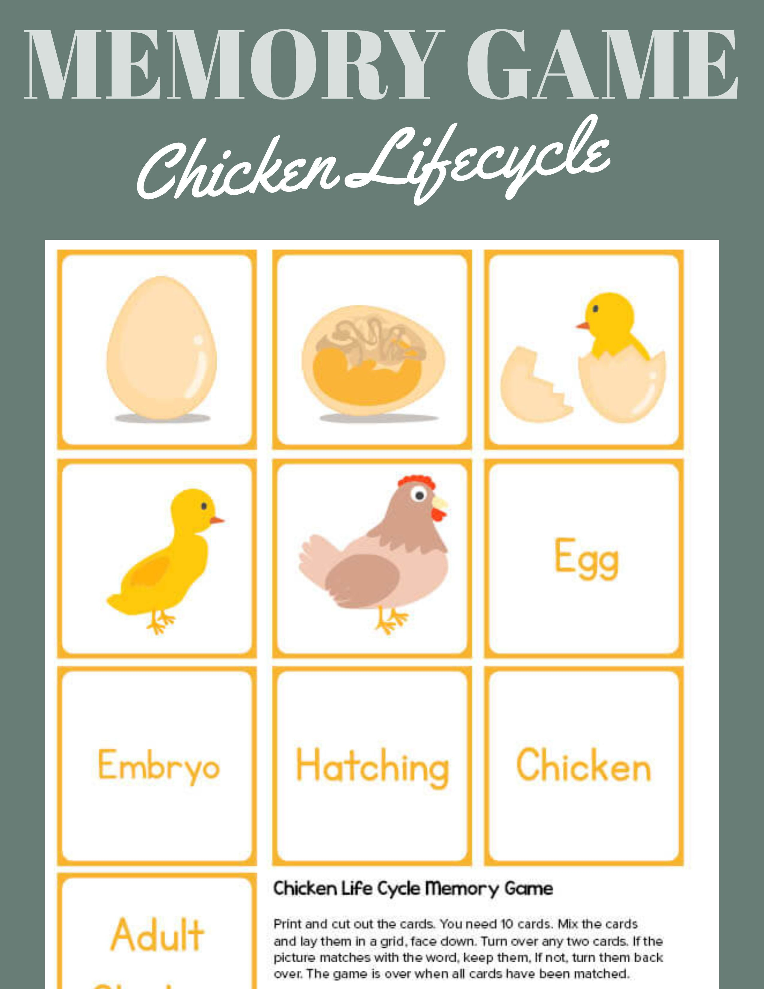 The Chicken Life Cycle Memory Game