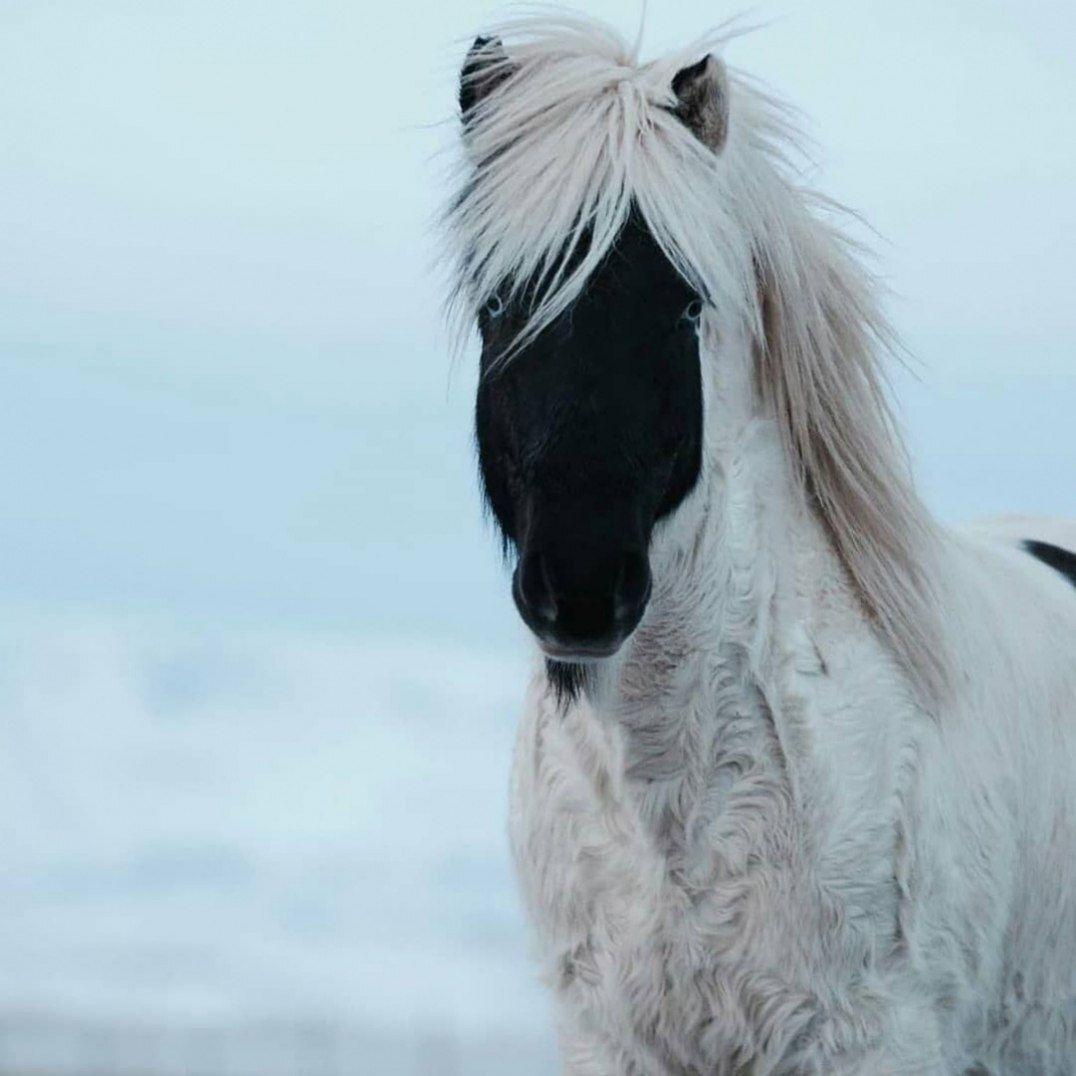 Seltene Schone Pferd Markierungen Cowgirl Magazin In 2020 Schone Pferde Muster Pferd Pferd [ 1076 x 1076 Pixel ]