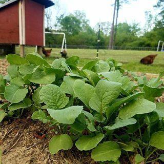 #garden #ideas #Philippines #Vegetable # ...