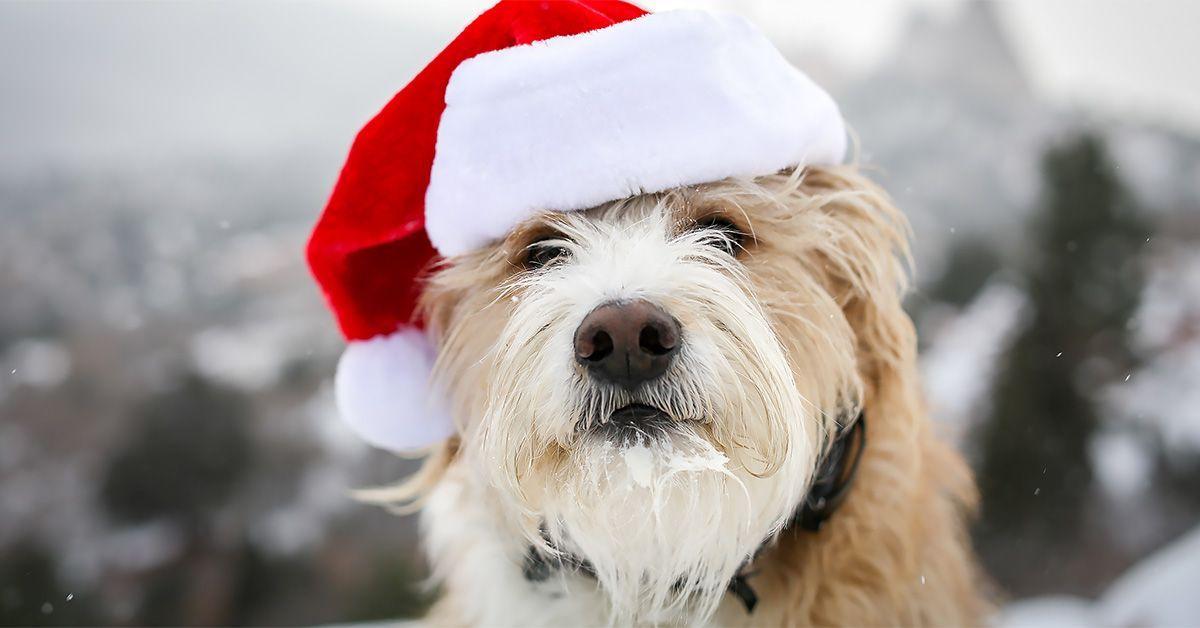 Dog trainer Mikkel Becker shares easytoimplement dog