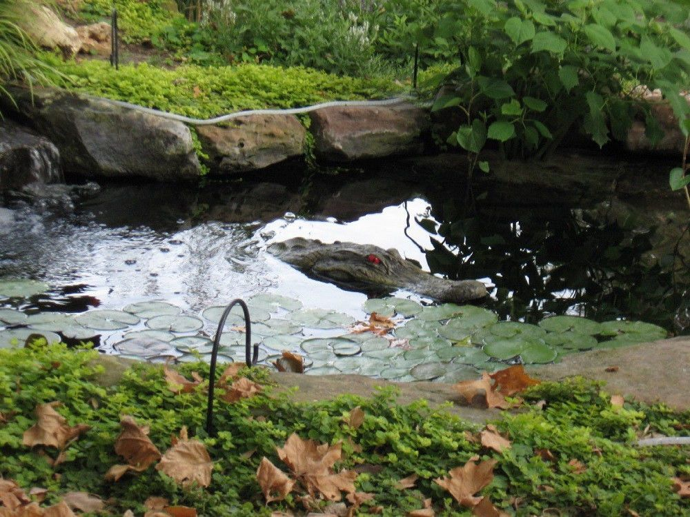 "Alligator 22"" Head Decoy & Pond Float W/ Reflective Eyes Geese Bird Heron Pool #AlligatorHead"
