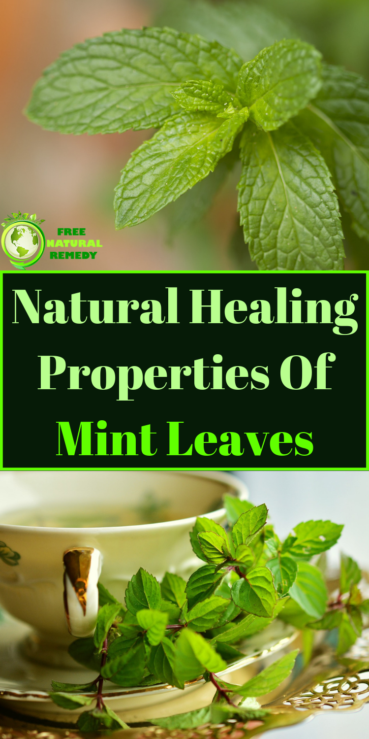 Mint natural remedy for many diseases | Natural healing ...