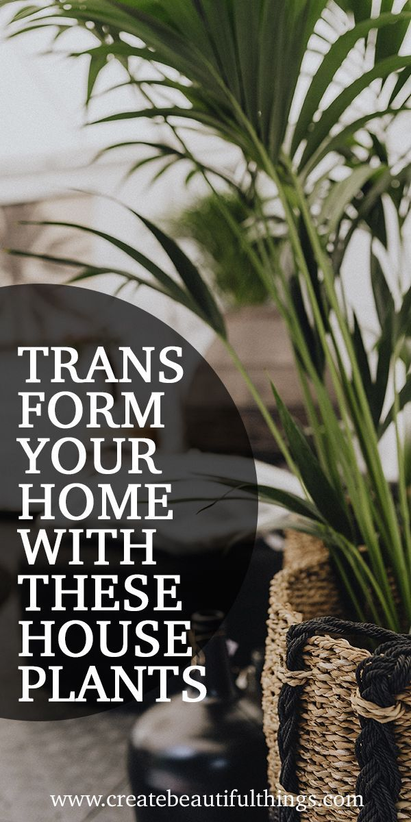 Photo of 9 Indoor Plants for Your Home & Health | Createbeautifulthings