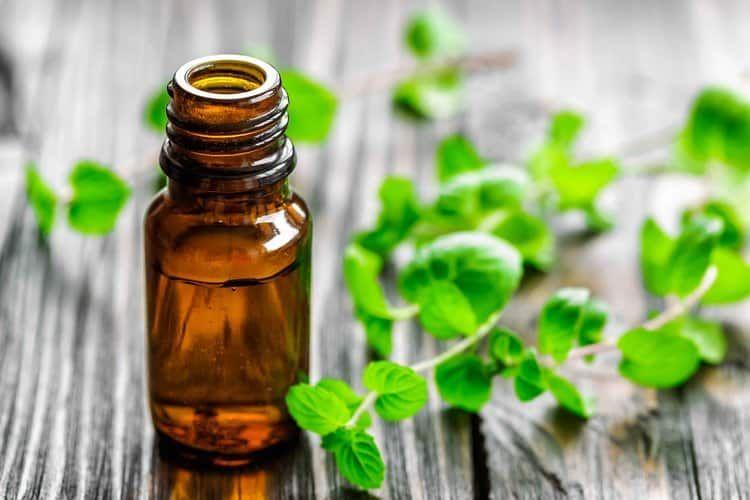 الأوريجانو ذلك النبات الذي ينتشر وجوده بدول المغرب العربي ويستخلص منه زيت الأوريجانو ذو الفو Essential Oil Benefits Peppermint Oil Uses Essential Oil Recipes
