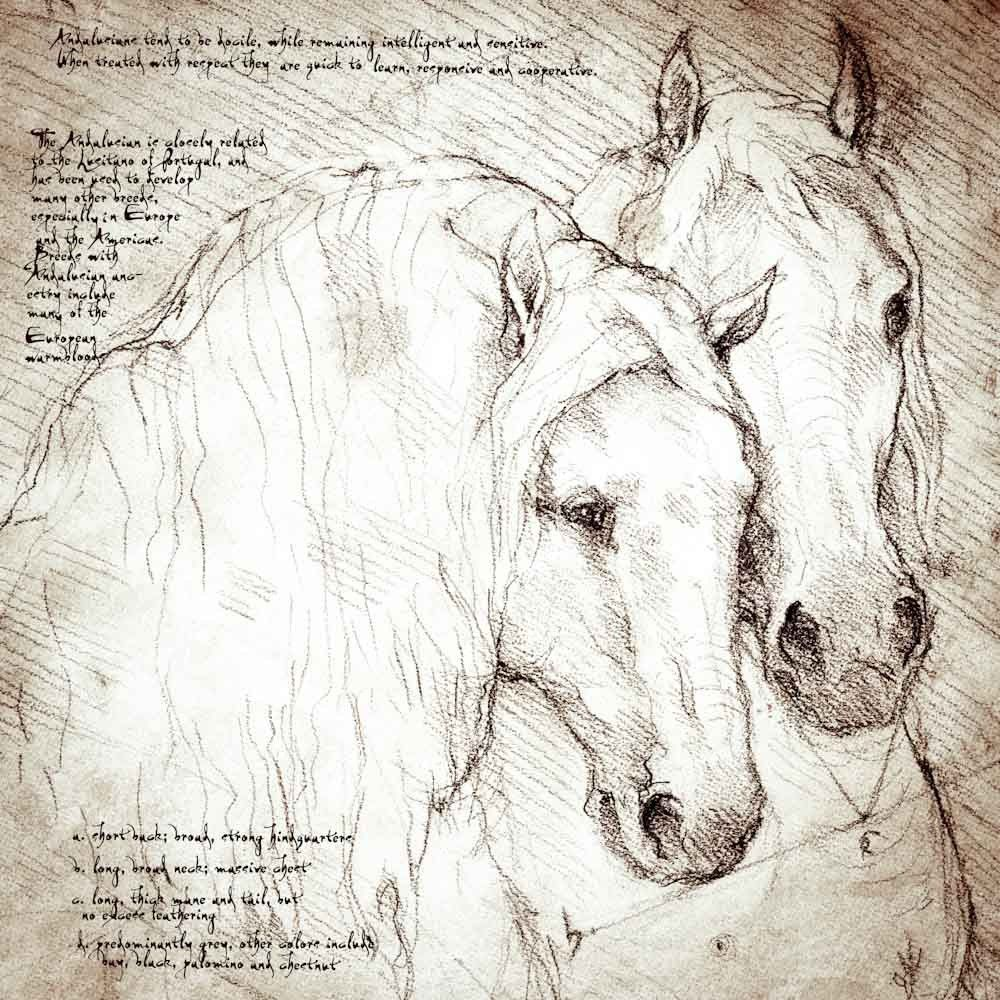 leonardo da vinci drawings - Google Search   Horses and Hoofed ...