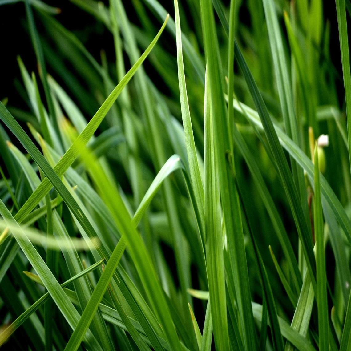 Grass Hevens way of saying hi