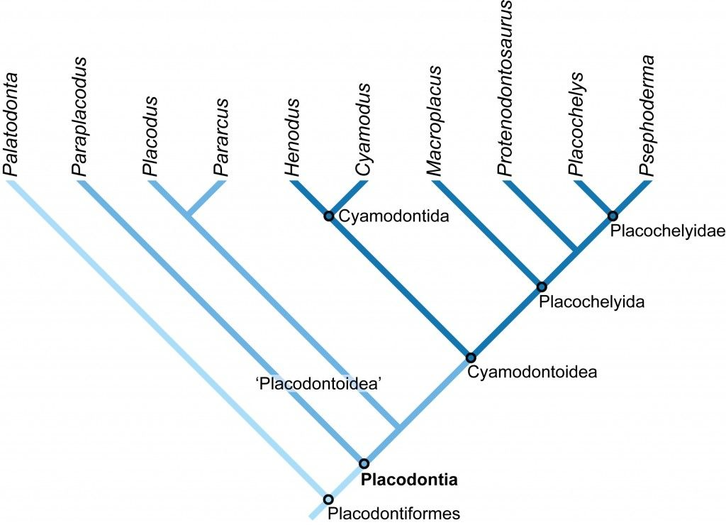 phylogenetic relationship of fishes and more aruba
