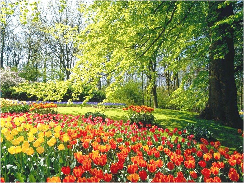 Flower Wallpaper Hd Full Screen Wallpaper Colorful Garden Garden Design Flower Garden