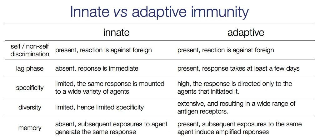 immunity flow chart innate vs adaptive immunity i immune system pinterest nurse stuff. Black Bedroom Furniture Sets. Home Design Ideas