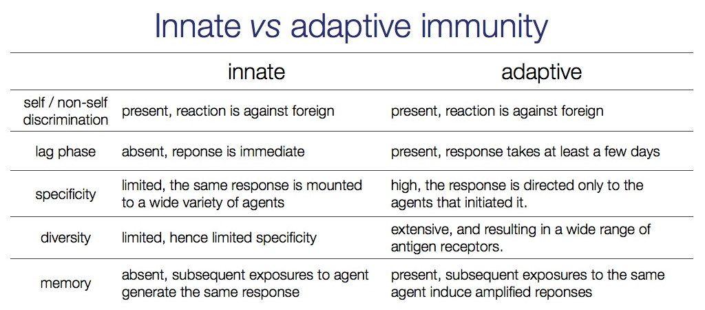 Immunity Flow Chart | Innate vs adaptive immunity. I | school ...