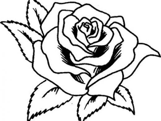 rosa para pintar | Flores | Pinterest