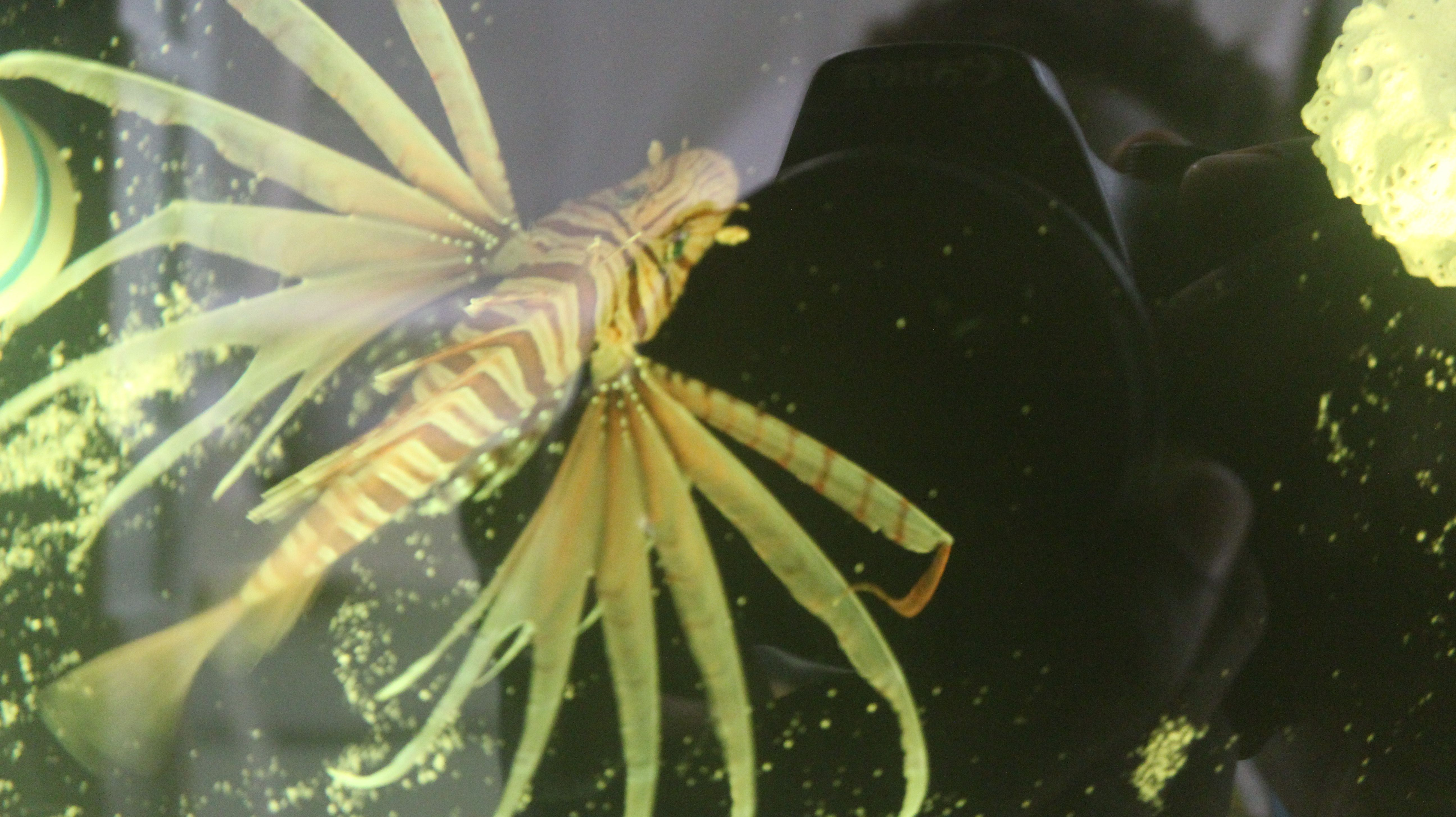 Tropical Fish For Sale Lion Fish Tropical Fish Fish For Sale