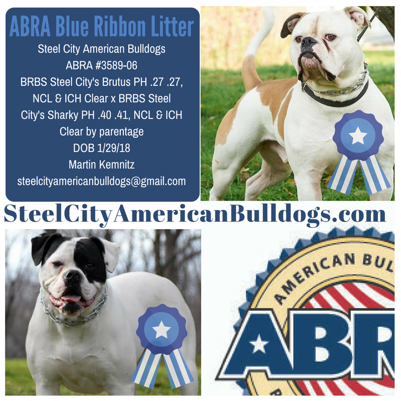 Congratulations On Your Blue Ribbon Pups Marty Way To Raise The