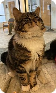 Pin By Melissa Gartner On Cute Cats Pinterest Maine Coon Cats