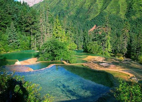 Un bosque primario,o bosque nativo,de nominado también bosque virgen,es un bosque intacto,y con un alto grado de naturalidad que nunca ha sido  explotado