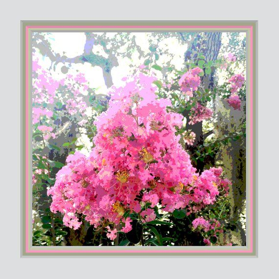 Wall Decor Pink Crepe Myrtle 12 X 12 Square Frame Ready Coordinated Triple Mat Easy To Diy Frame Bedroom Wall Decor Shabby Chic Floral Wall Art Floral Wall Diy Frame