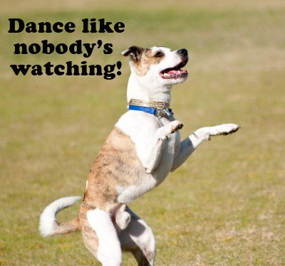 Dance like nobody's watching! | Dog pictures, Cute dogs, Doggy