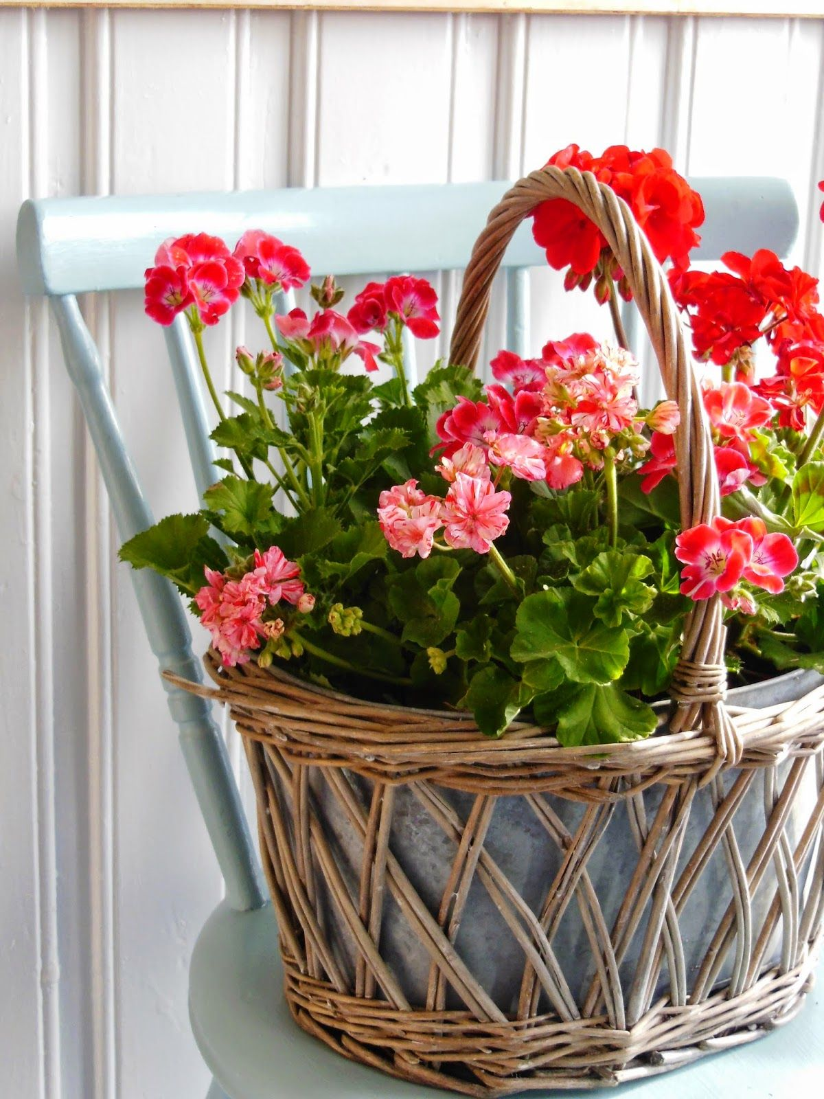 Geraniums, basket, chair. What's not to love!