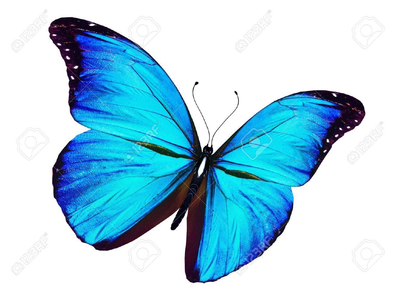 Stock Photo Decoupage Farfalle Tatuaggio Blu E Blu
