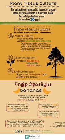 Plant Tissue Culture | Piktochart Infographic Editor | GMOs