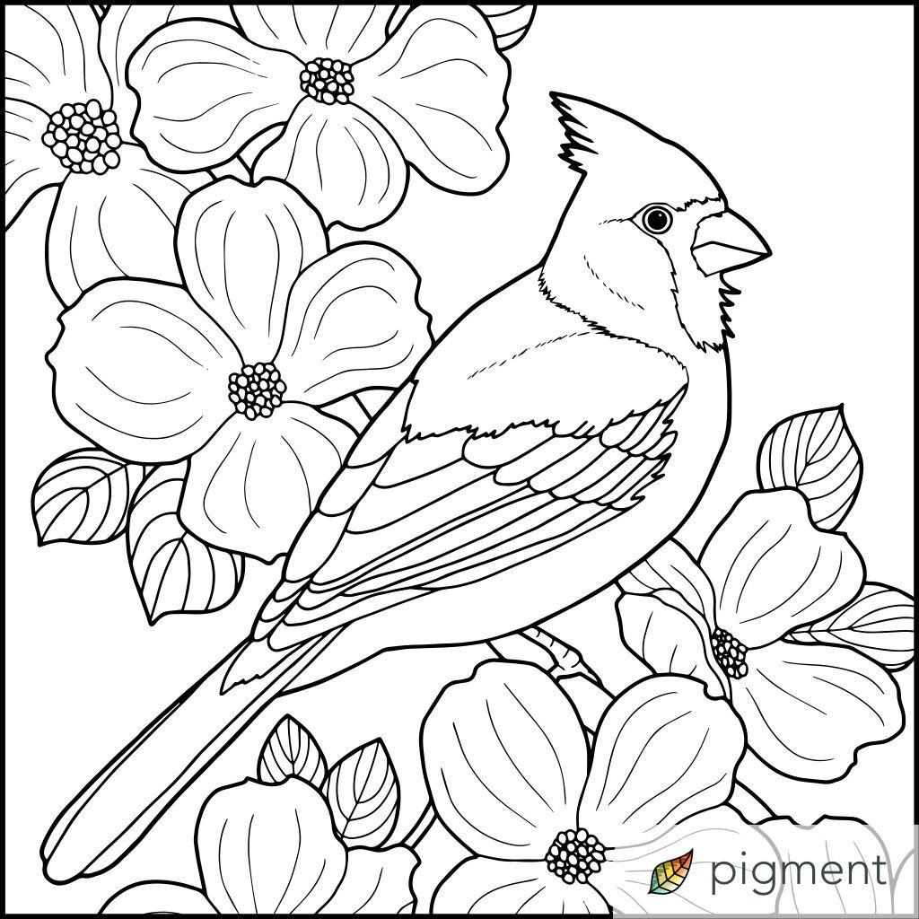 Cardinal Drawing For Copy Bird Drawings Bird Coloring Pages Coloring Pages