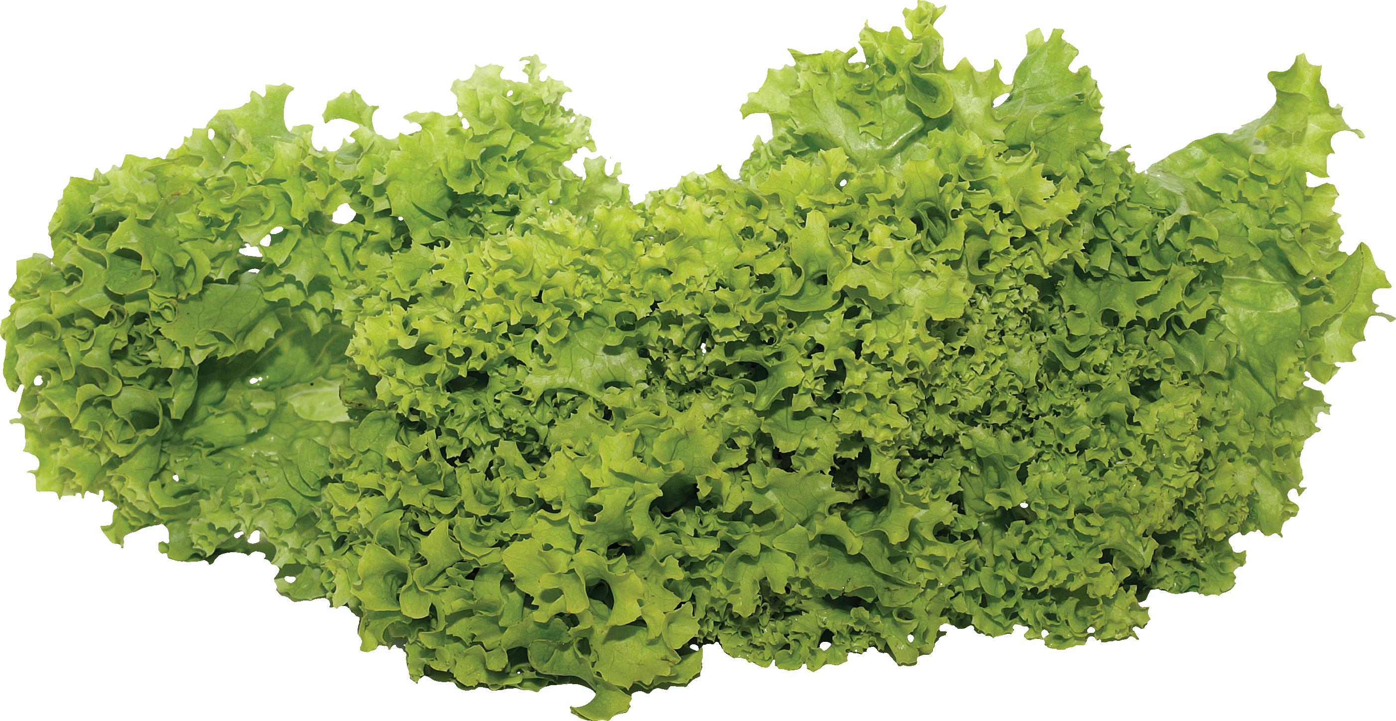 Lettuce Leaf - Green Salad Png - Free Transparent PNG Download - PNGkey