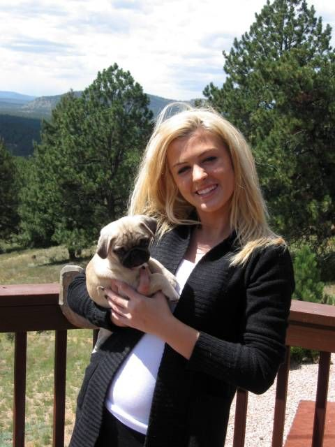 Pug Puppies For Sale In Colorado Pikes Peak Pugs Pug Puppies
