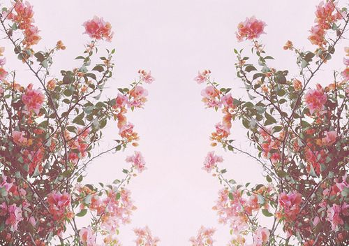 Flower Tumblr Themes Buscar Con Google Backgroundspink Flowers