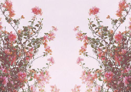 Flower tumblr themes buscar con google flowers pinterest flower tumblr themes buscar con google mightylinksfo