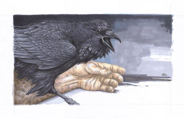 Download Bird Illustrations by Nicholas Mikesell at Coroflot.com   Bird illustration, Birds, Illustration
