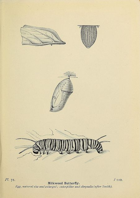 The butterflies of the British Isles, F. Warne, 1906