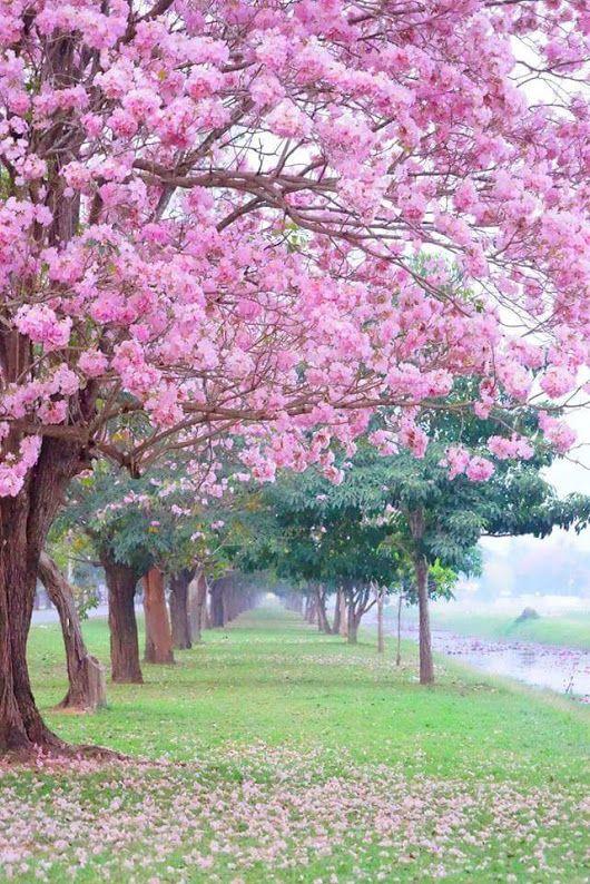 Pin Oleh Carmen Soto Di Pictures Taman Indah Fotografi Pemandangan Bunga Sakura