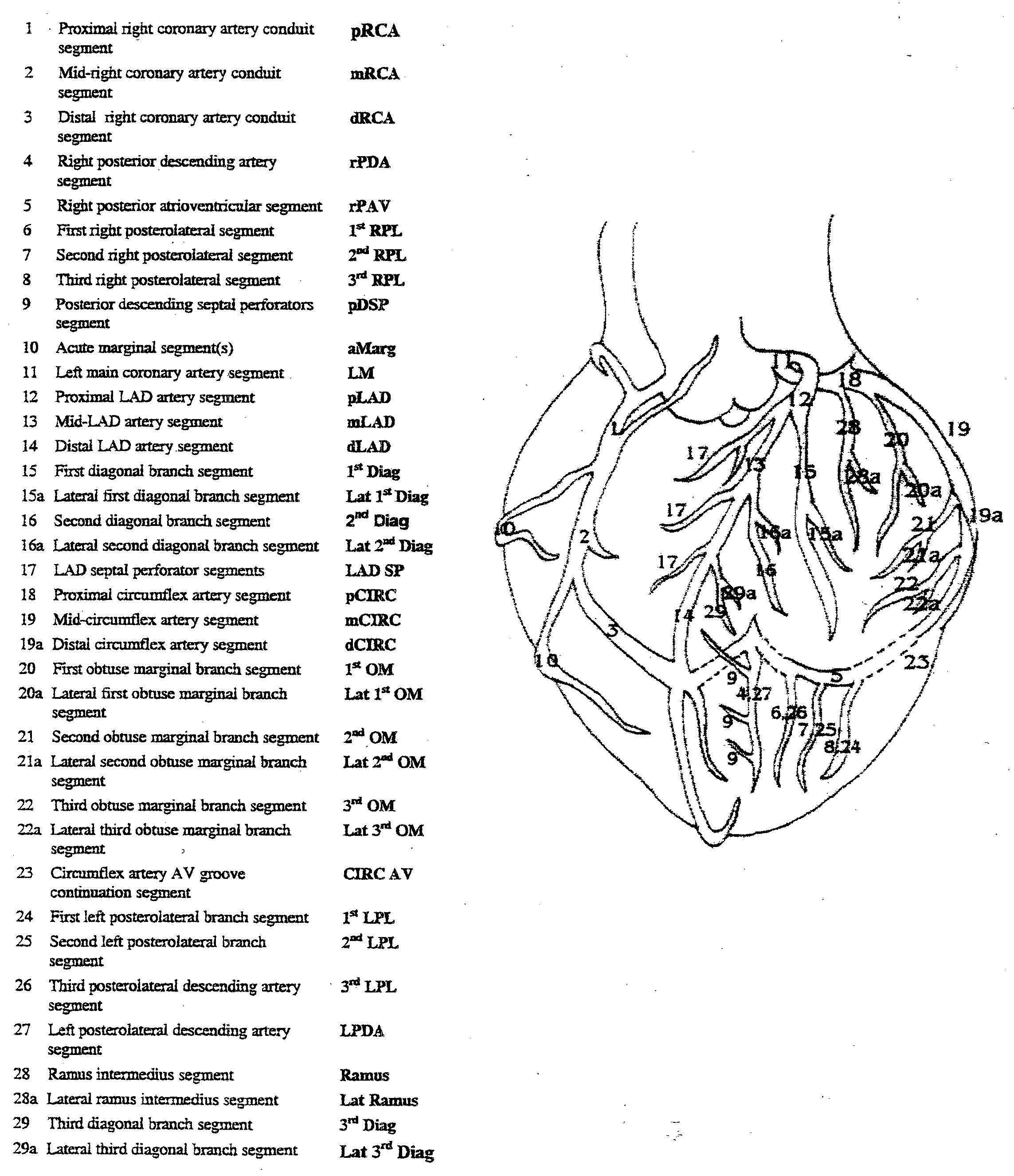 coronary artery images | Coronary Artery Anatomy | Medical Reference ...