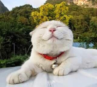 Happy Happy Shiro