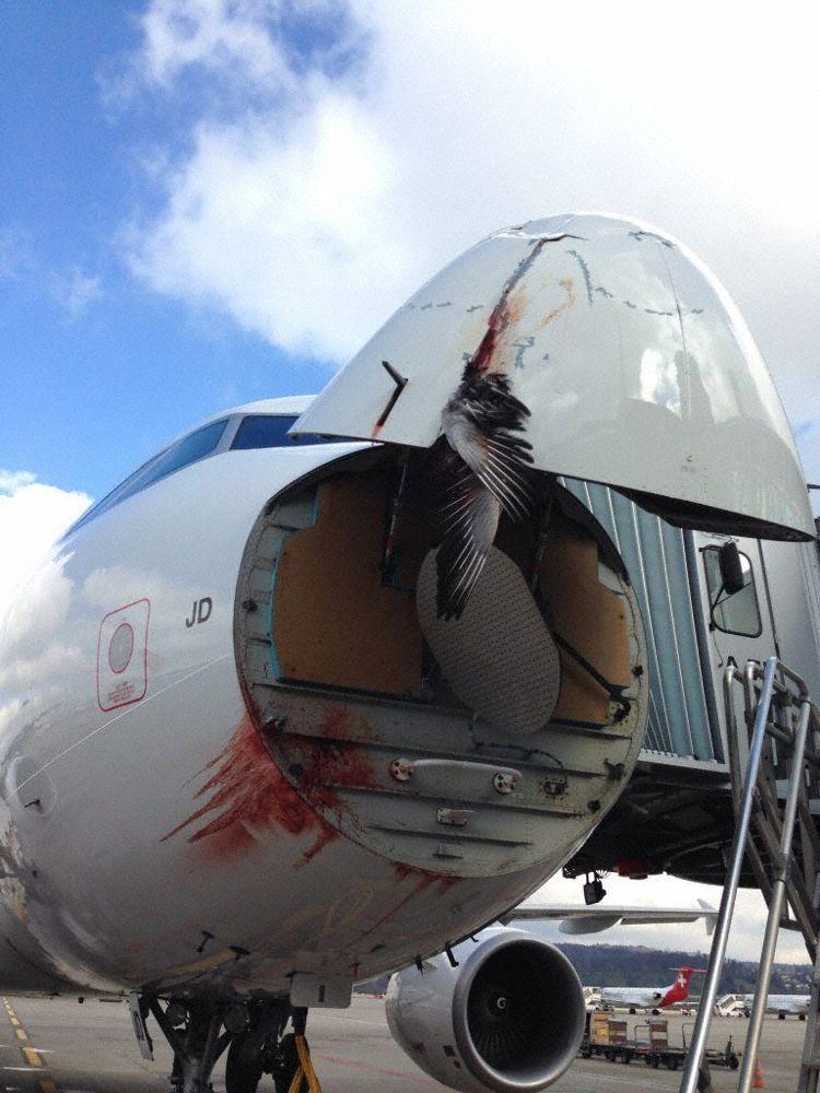 Incident Swiss A320 at Copenhagen on Feb 27th 2014, bird