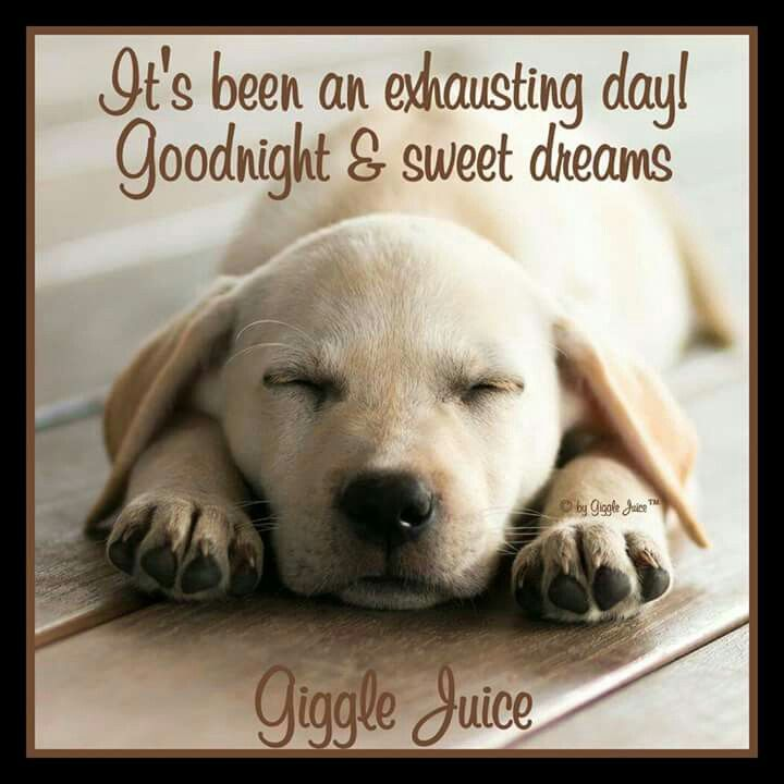 Pin by Margaret Strain on Good Night & Sweet Dreams   Dogs