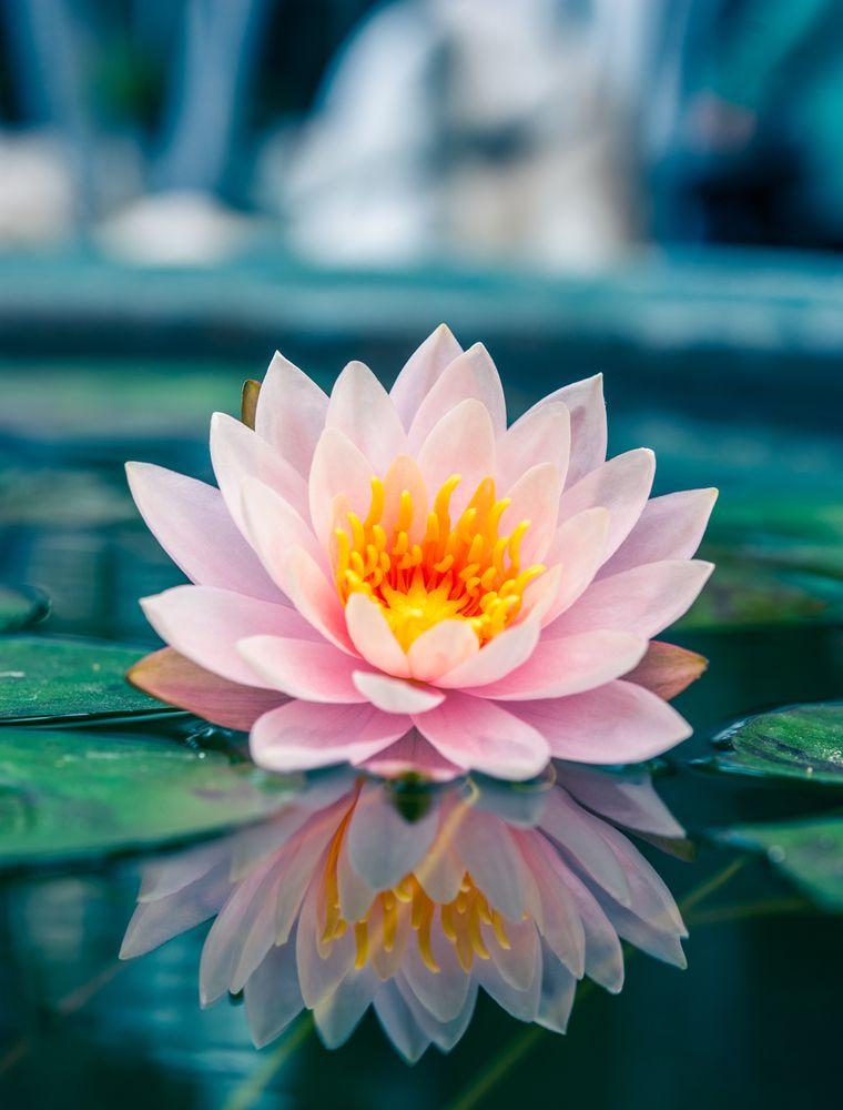 Photography Lotus Reflection Sku Da00040 Painting Exotic